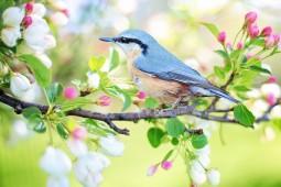 Jak się przebudzić z zimowego snu, czyli 7 rad dla lepszego snu wiosną